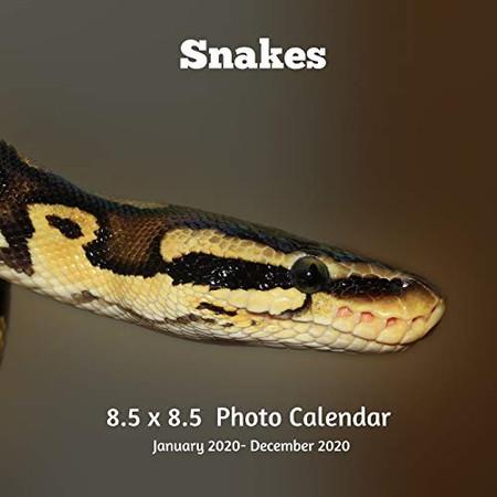 Snakes 8.5 X 8.5 Photo Calendar January 2020 -December 2020: Monthly Calendar with U.S./UK/ Canadian/Christian/Jewish/Muslim Holidays- Nature Snakes Reptiles