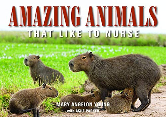 Amazing Animals: That Like to Nurse (Family and World Health)
