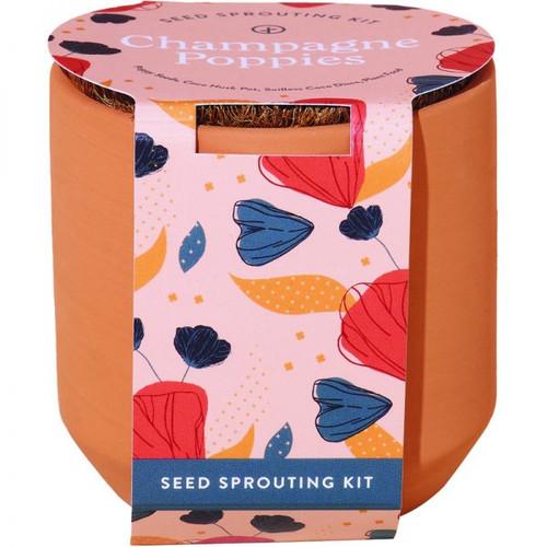 Champagne Poppies Terracotta Kit
