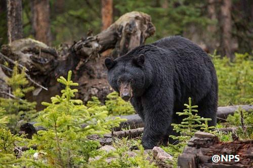 イエローストーン国立公園 北側1日観光
