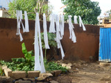 Plastic ribbons being dried