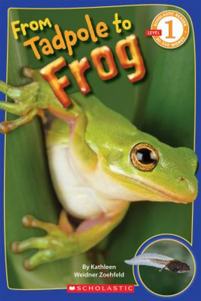 From Tadpole to Frog [Paperback] Cover