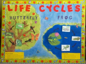 Life Cycles: Spring Bulletin Boards