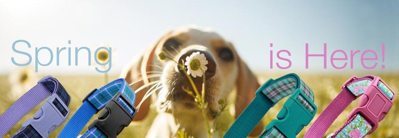 Spring Dog Collars