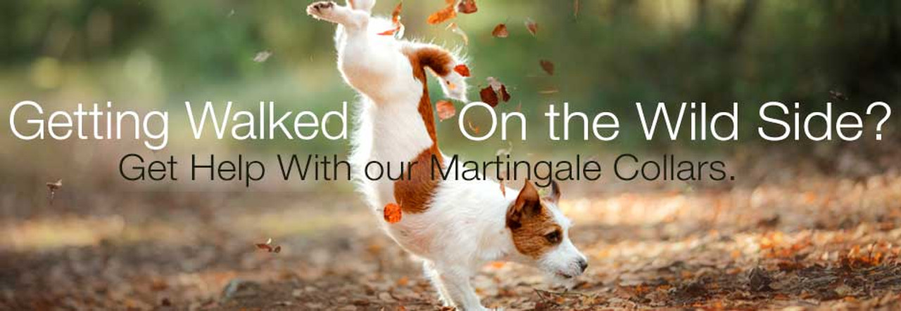 Martingale Dog Collars, limited slip dog collars