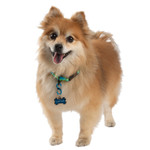 S-Biner Dog ID Tag Clip on Small Dog