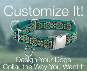 customized dog collars for your dog