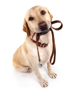 Dog Collar and Leash Care