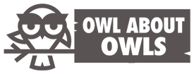 OwlAboutOwls