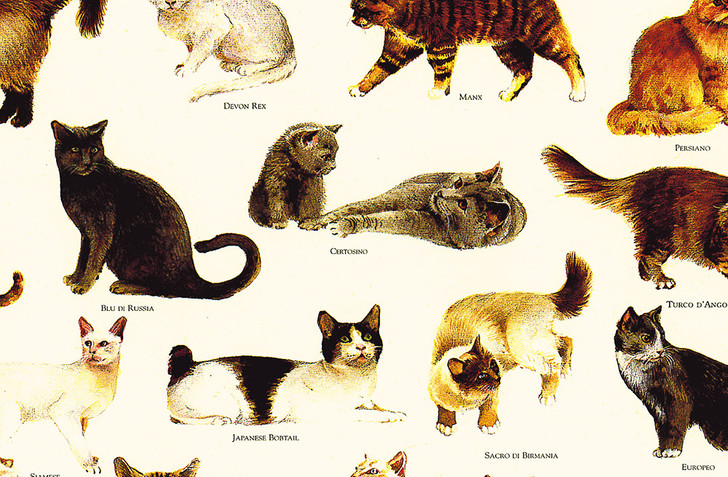 T1700 - CATS