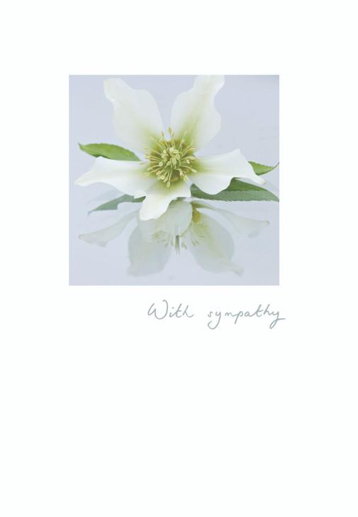K454301 - WHITE FLOWER