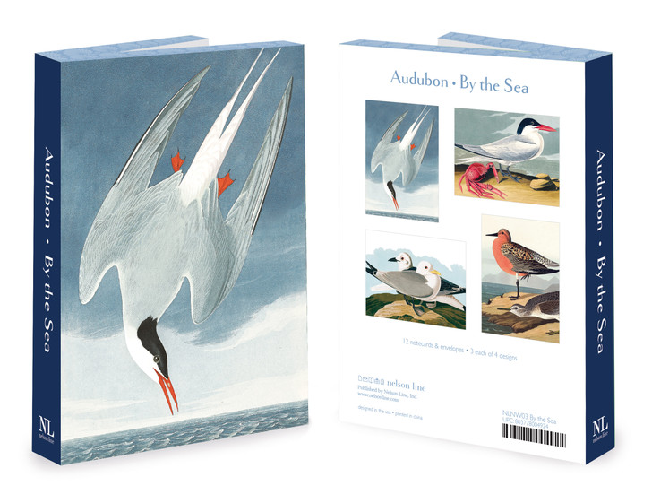 NLNW03 - AUDUBON SEA BIRDS