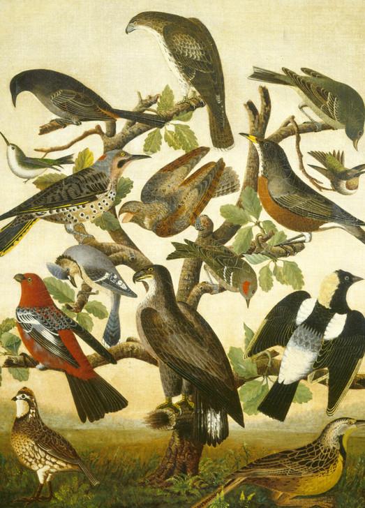 NMX27 - BIRDS