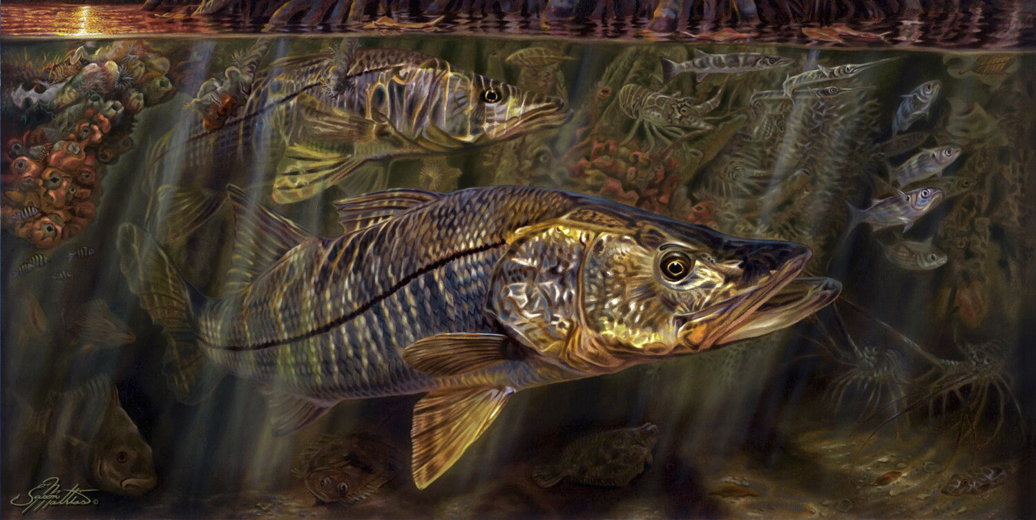grove, garden, snook, art, painting, underwater, mangrove, scene, sunset, sunrise, jason mathias, art, gamefish, sportfish, fish, art, gift