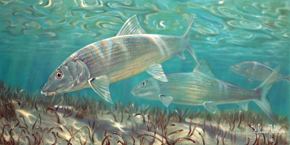 bone-fish-art-jason-mathias-underwater-art-gamefish-art-sportfish-art-ghost-fish-flats-fishing-art-fly-fishing-art.jpg