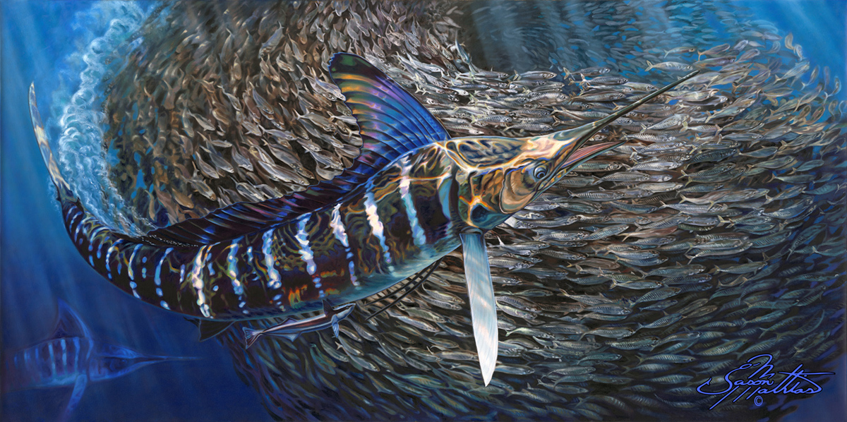 striped-marlin-baitball-art-jason-mathias.jpg