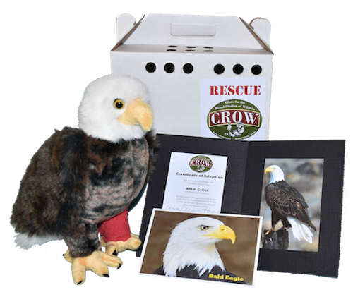 Adopt-A-Species: Bald Eagle