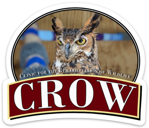 CROW Magnet, Mina the Great Horned Owl