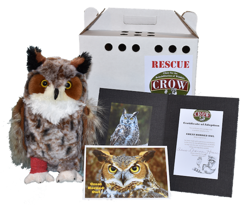 Adopt-A-Species: Great Horned Owl