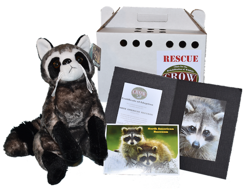 Adopt-A-Species: Northern Raccoon