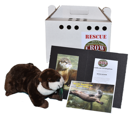 Adopt-A-Species: North American River Otter