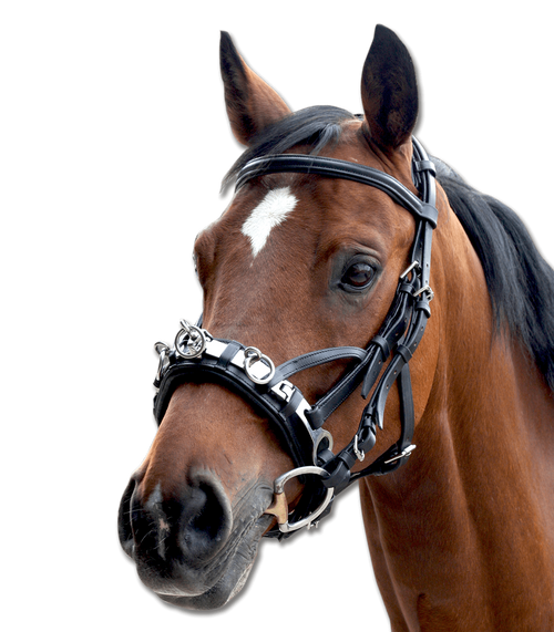 Leather Lunging Cavesson