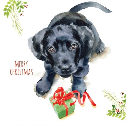 10 Pack Charity Cards - Puppy Dog Wishes