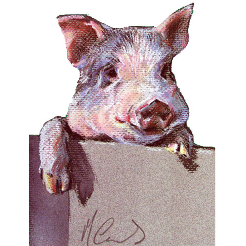6 Pack Greeting Cards - Inquisitive