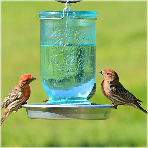 Perky Pet 783 Glass Mason Jar Wild Bird Waterer 32 oz w/ Metal Base