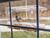 JCs Wildlife All Acrylic Window Bird Feeder - Holds 2 Cups of Bird Seed