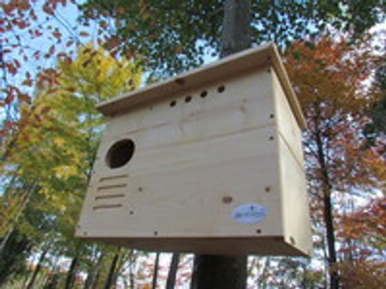 Shop Our Barn Owl Nesting Box   JCs Wildlife