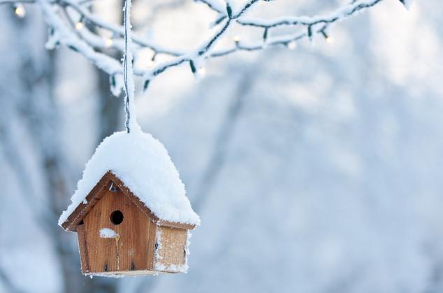 Winter-proofing Your Birdhouse | JCs Wildlife