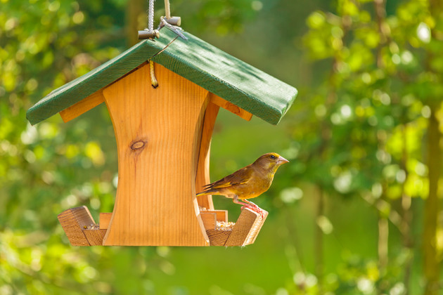 Bird Friendly Backyard Projects | JCs Wildlife