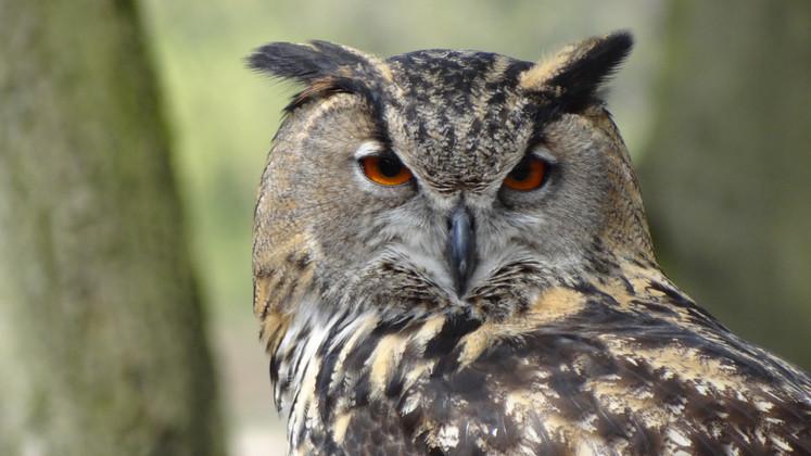 Tips for Bird Photography   JCs Wildlife