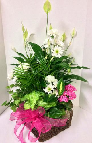 Mixed Planter Basket Large