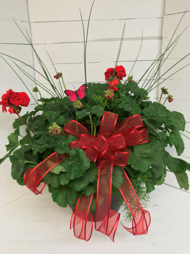 "14"" Decorative Patio Pot with Geraniums, Accent Plant & Bow"