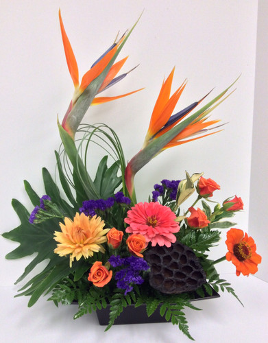 Stylish Tropical Garden arrangement