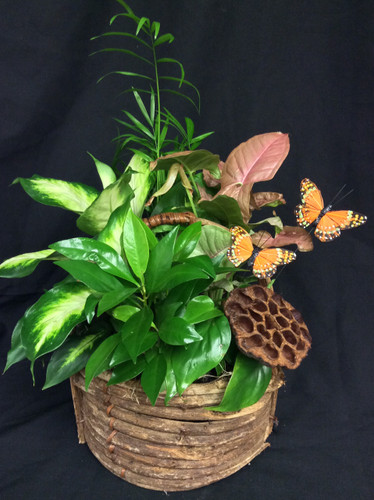 Butterfly and lotus planter