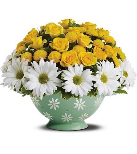 Daisy & Roses Colander