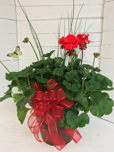 """12"""" Decorative Patio Pot with Geraniums, Accent Plant & Bow"""