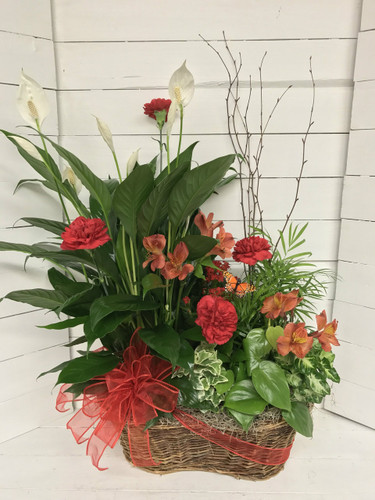 Peruvian lily, birtch, and butterfly planter with fresh cuts