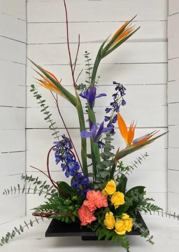Contemporary Garden Arrangement