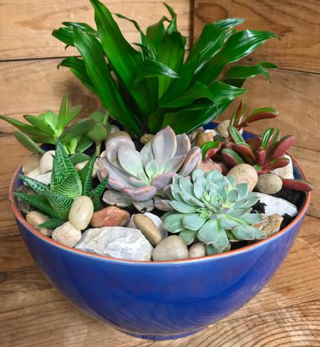 Large Succulent Garden in Ceramic Bowl