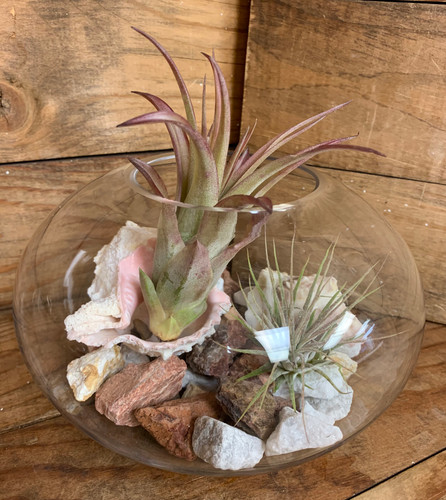 Medium Round Desktop Terrarium