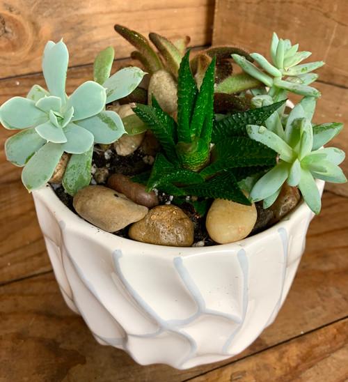 Succulent Garden  Medium Size