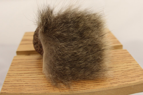Australian Opossum-small