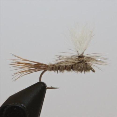 Parachute Hare's Ear