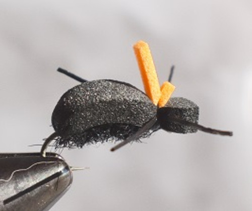 Taylor's Beetle