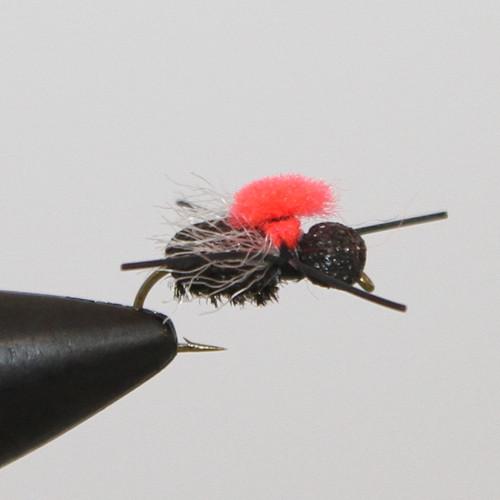Fat Head Beetle