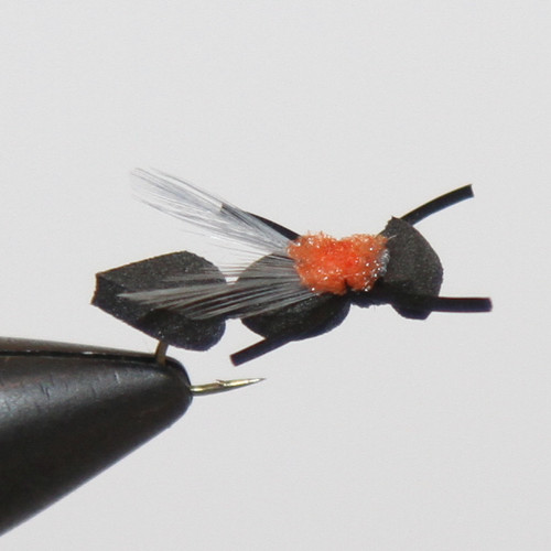 Black Foam Flying Ant